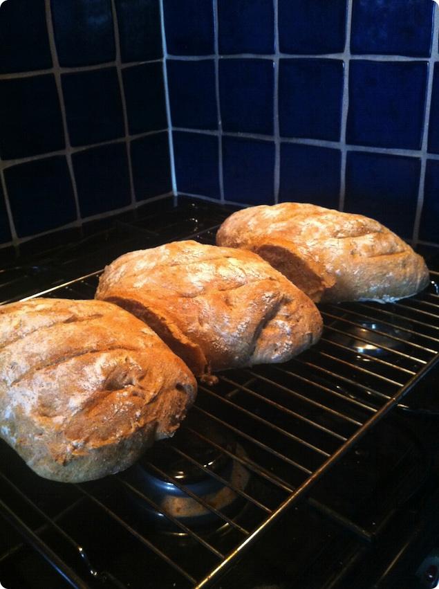 Surdeg på burk - Färdiga bröd