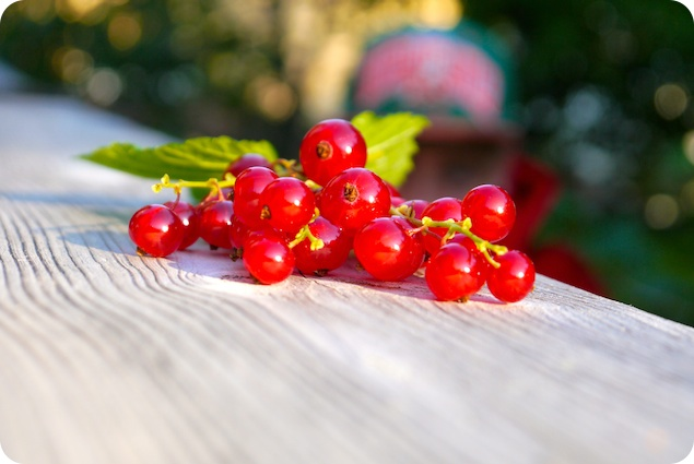 Vinbärskaka med marängtäcke - 1