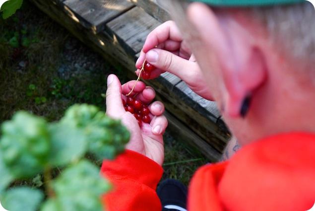 Vinbärskaka med marängtäcke - 2
